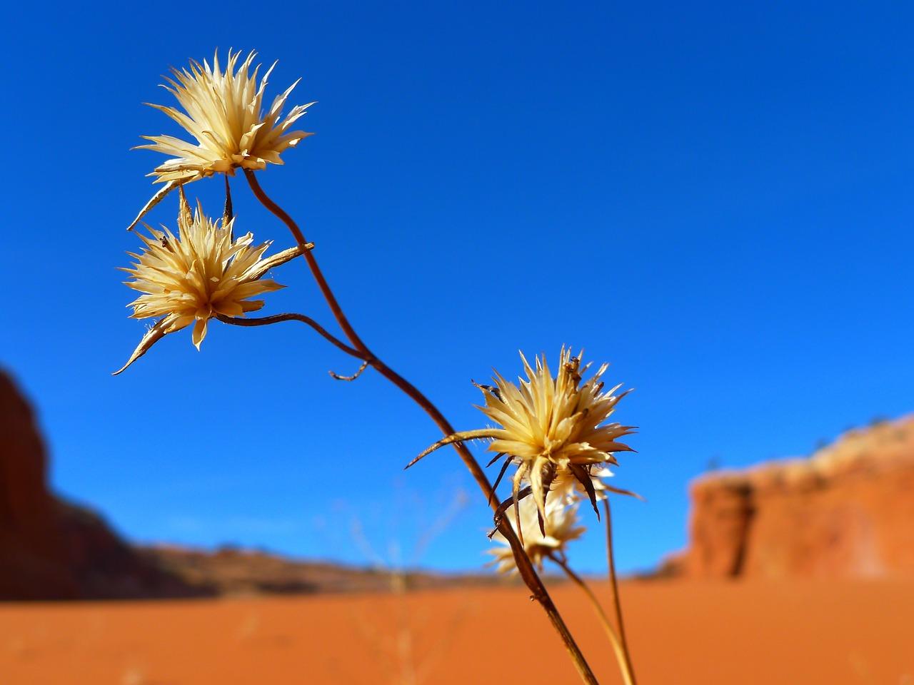 La belleza del desierto