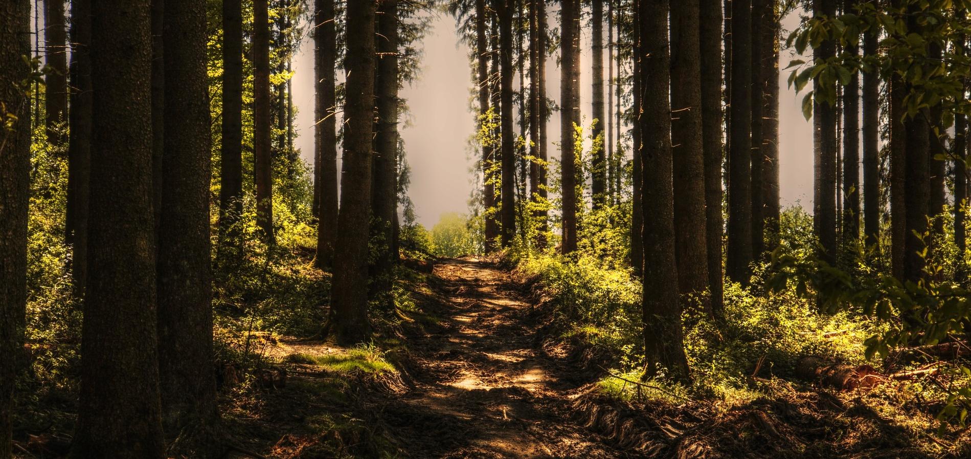 Un paseo por la naturaleza nos calma